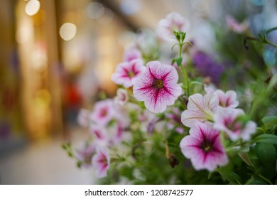 Closeup Flowerbed with multicoloured petunias, Image full of colourful petunia (Petunia hybrida) flowers and bokeh background