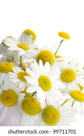 Close-up flowers daisies isolated on white background