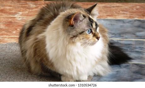 close-up fluffy cat
