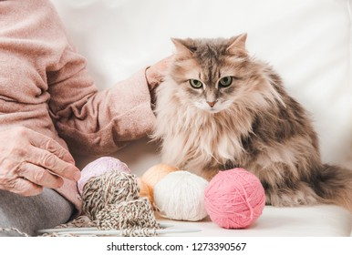 Closeup of fluffy cat with colorful laces balls near grandmother