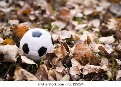 close-up football (soccer) black and white ball buried in fallen yellow autumn leaves. Game time.  football season