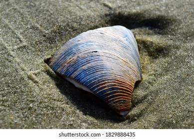 Closeup of a fragment of a colorful blue seashell in the sand
