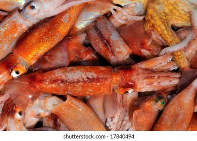 close-up of fresh calamari