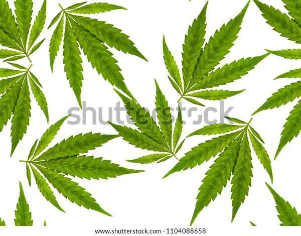 Closeup of fresh Cannabis leaves isolated on white background, seamless image to be repeated endlessly.