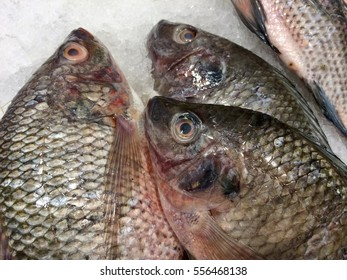 Close-up of Fresh Fish, Pla Nin in the Thai name and Oreochromis niloticus in Science name, This one is a popular eating in Thailand and other countries