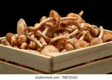 Closeup of fresh honey mushrooms in basket on black background.