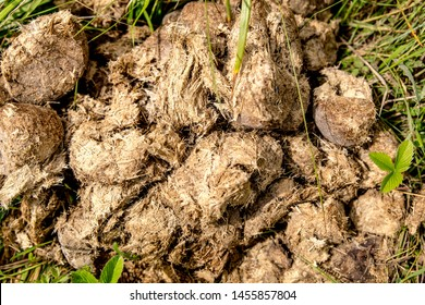 Close-up of fresh horse manure, horse poo. Texture of the manure on the grass.