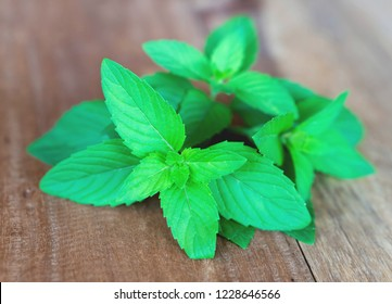 Closeup fresh mint on wood table background, herb and medical concept, selective focus