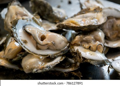 Close-up of fresh oysters on a white plate with ice