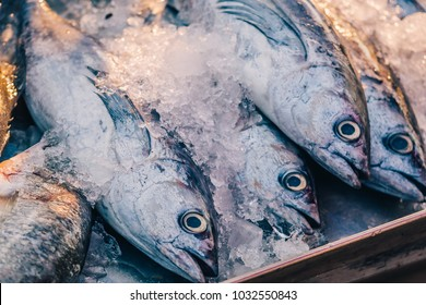Closeup of Fresh Raw Short Mackerel or Shortbodied Mackerel (Rastrelliger brachysoma Fish) on Ice in the local open market against golden sunbeam as fishery industry or Asian fish market background