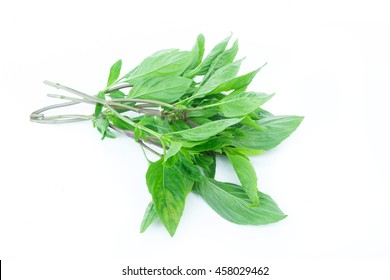 Closeup fresh sweet basil vegetable on white background,raw material for cooking