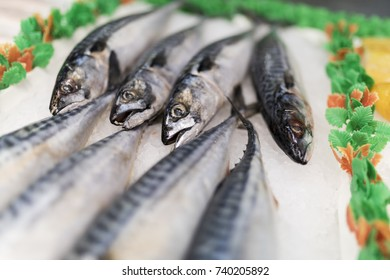 A close-up of freshly caught mackerel on ice on a market stall in England, UK