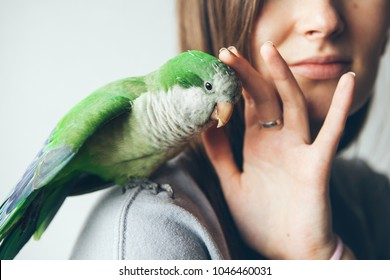Close-up of friendly and cute Monk Parakeet. Green Quaker parrot is sitting on woman shoulder. Woman is petting parrot.