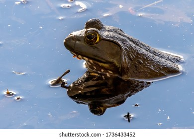 closeup frog in local pond