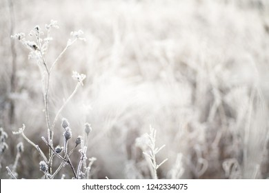 Closeup of frozen flowers on a meadow in winter, with a shallow depth of field and neutral colors