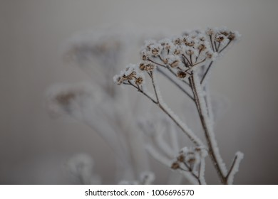 Close-up of a frozen plant.