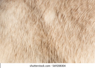 Close-up of the fur of a polarbear