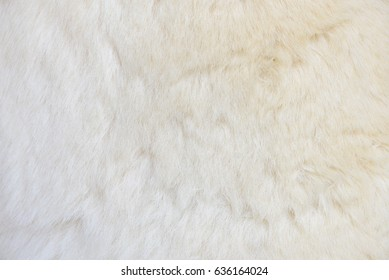 Close-up of the fur of white polar bear