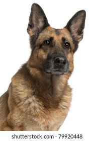 Close-up of German Shepherd Dog, 10 years old, in front of white background