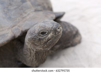 Closeup of giant tortoise at Curieuse island, Seychelles