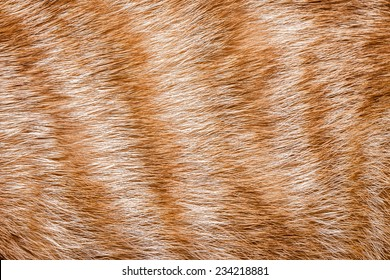 Close-up of ginger cat fur