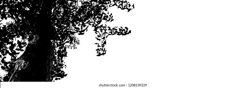 Close-up of A Ginkgo Tree, Ginkgo Biloba, Black And White Silhouette With Copy Space