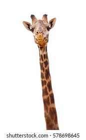 Closeup giraffe with happy smiling expression. Head and neck isolated on white.