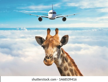 Close-up of giraffe head above clouds and a plane flying behind. The giraffe is looking at camera. Summer day in Kilimanjaro ,National park of Kenya, Africa. Funny and cool photo manipulation.