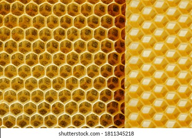 Close-up of Golden wax honeycombs on a beehive frame. The concept of beekeeping
