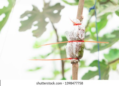 Closeup grafting tree branch with nature background