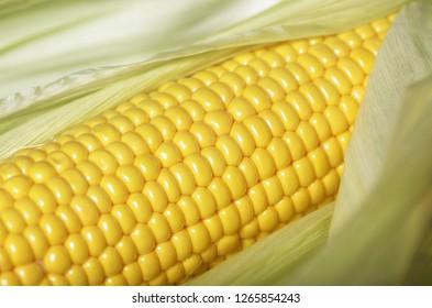 close-up grains of ripe corn