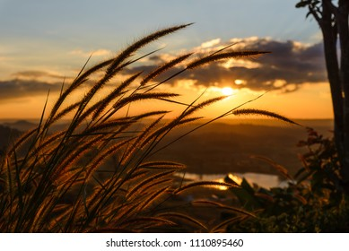 Close-up grass flower with sunset on background