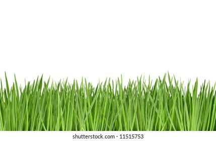 Close-up of grass isolated on white background.