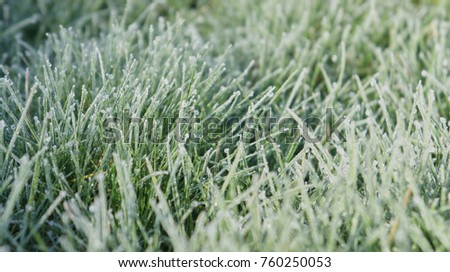 Closeup of grass on a frosty morning