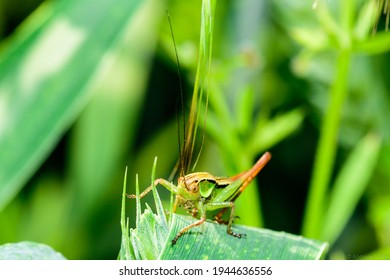A closeup of a grasshopper on the grass in a field under the sunlight with a blurry background