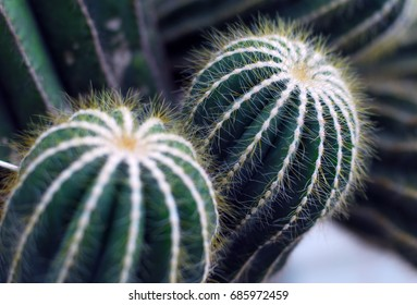 closeup of green cactus plant with sharp thorns