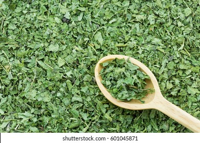 Closeup of green dried Common nettle leaves on wooden spoon to make hot herbal tea