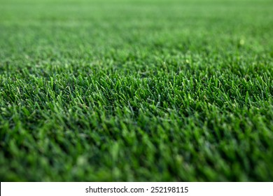 Closeup green fresh Cut focused Lawn on background