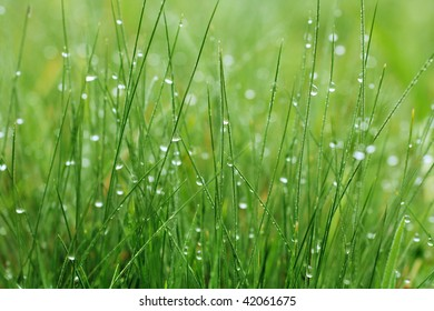 Closeup of the green grass covered dew