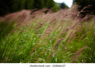 Closeup of green grass with red buds and seeds with blurred background