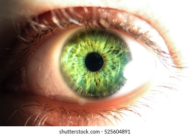 Close-up of green human eye