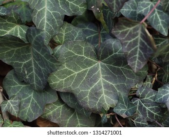 closeup of green leaf
