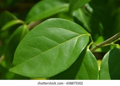 Close-up green leaf