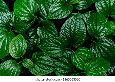 Closeup green leaf background.
