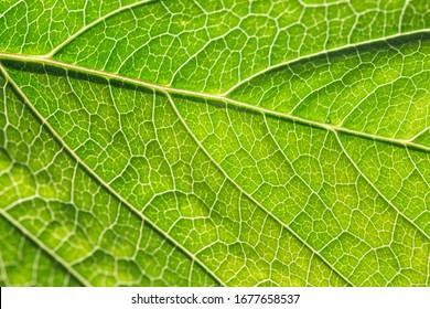 Close-up of green leaf background