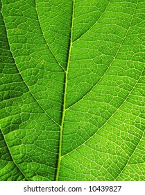 Close-up of green leaf with detailed structure