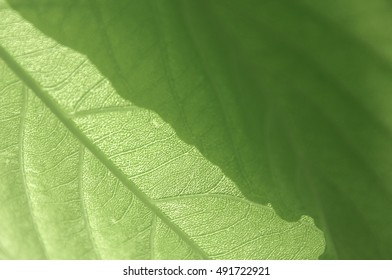 closeup of green leaf texture background