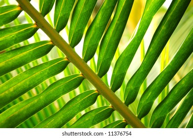 Closeup of green leaf of tropical plant