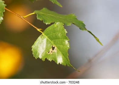 close-up green leaf in warm spring