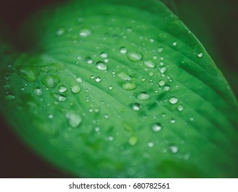 Closeup green leaf and water drop on vintage style